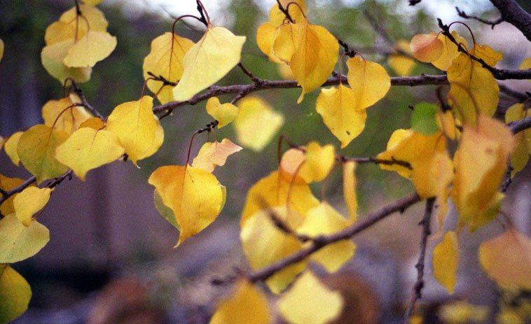 apricot ----- November 10, 2oo3 Albuquerque -- photo by Mark Weber