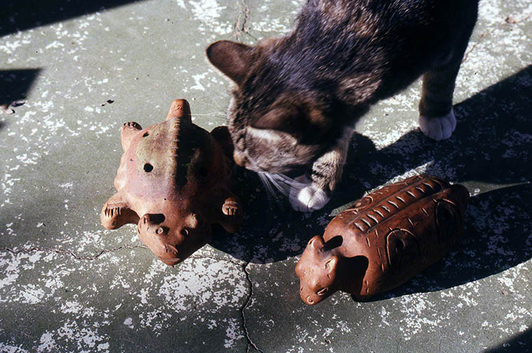Vinny Golia's Mayan ocarinas with my cat Charlie ---- May 1, 1994 Albuquerque -- photo by Mark Weber