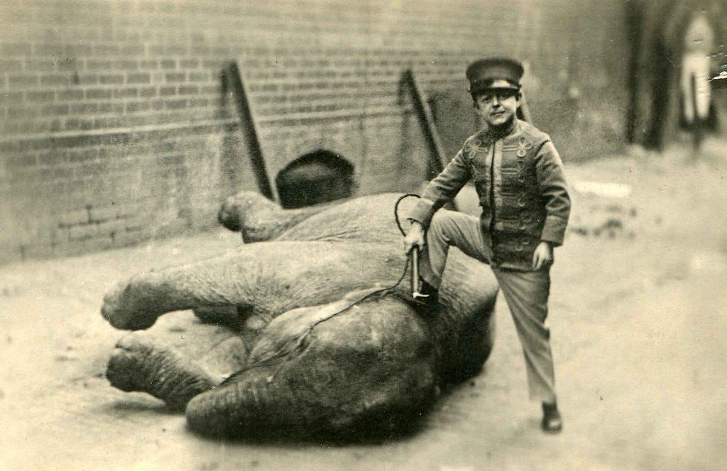 midget elephant trainer 1920's