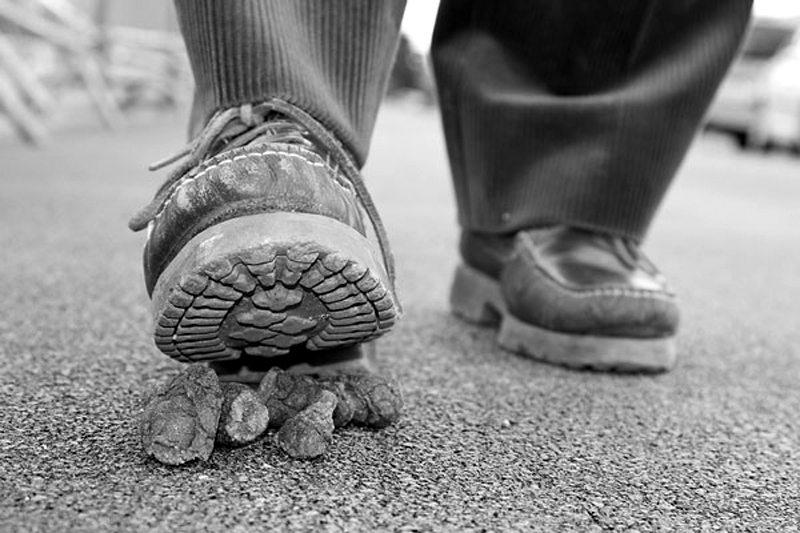 stepping-on-poop