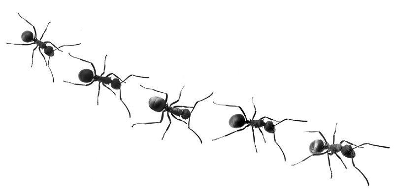 ant-trail