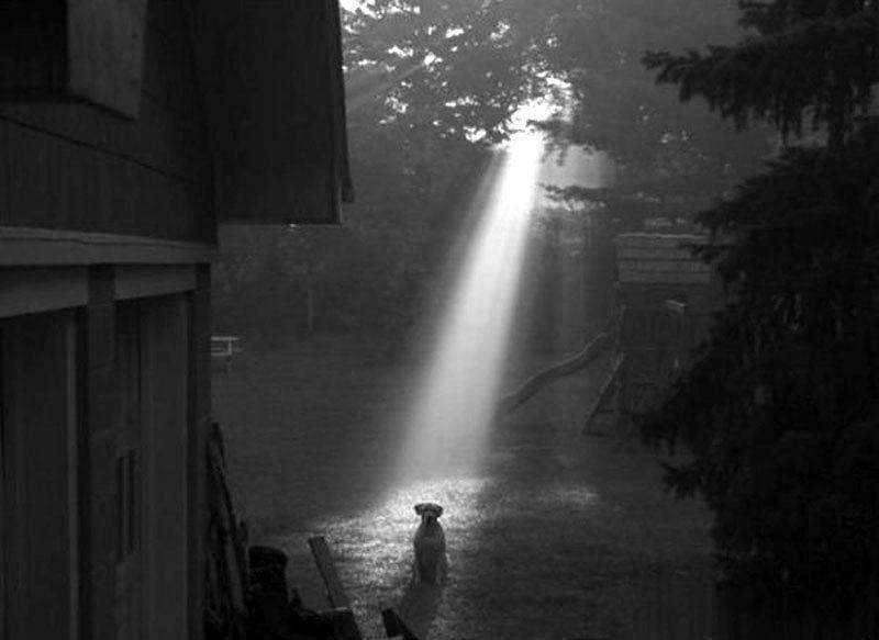 _dog_in_lightbeam-1